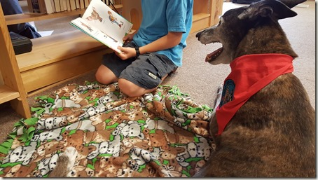 Child reading to greyhound